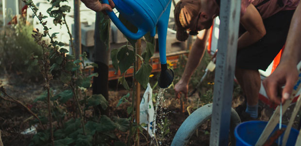 Post image Non profit social and charity organisations Environmental charities - Non-profit social and charity organisations